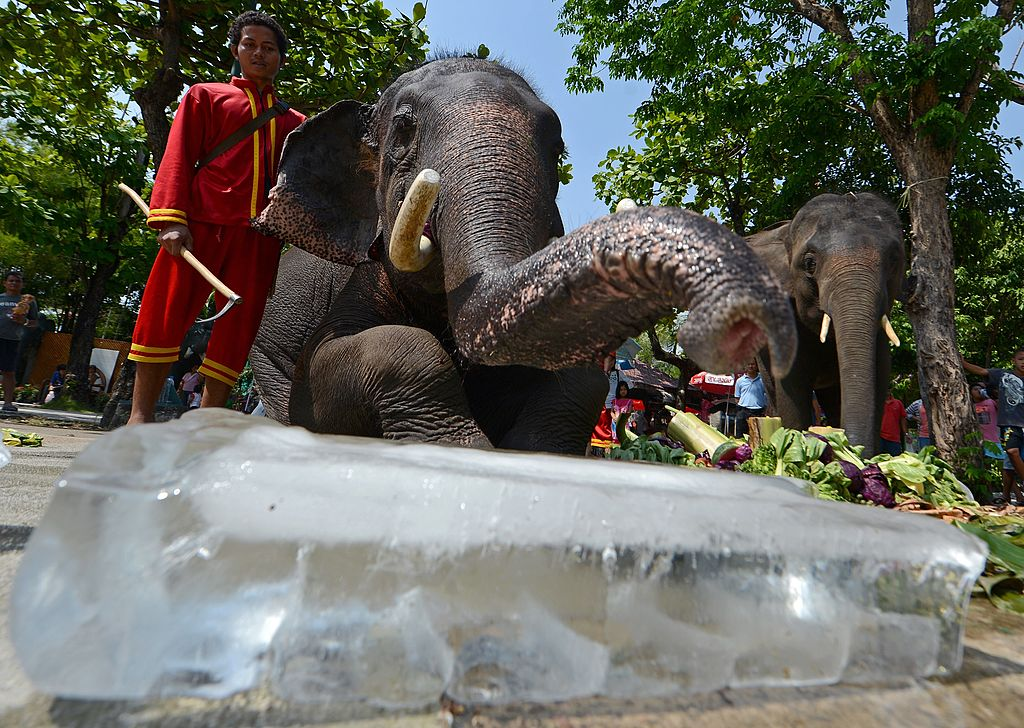 Elephants enjoy pieces of ice and frosted fruits during hot weather at Dusit Zoo in Bangkok