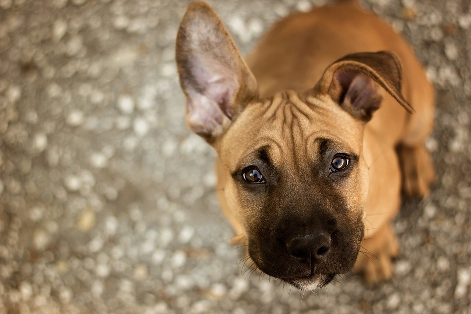 The Dog Breeds And Cat Breeds That United Is Banning