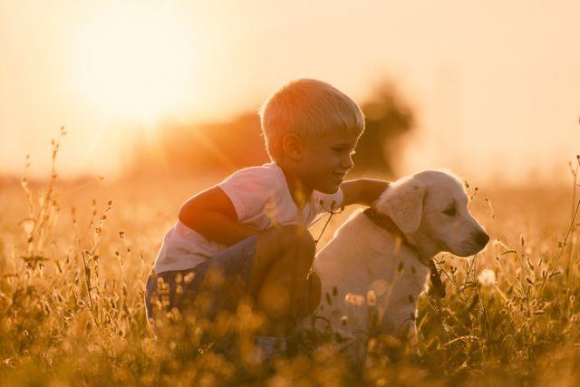 Young Child Boy Training Golden Retriever Puppy Dog