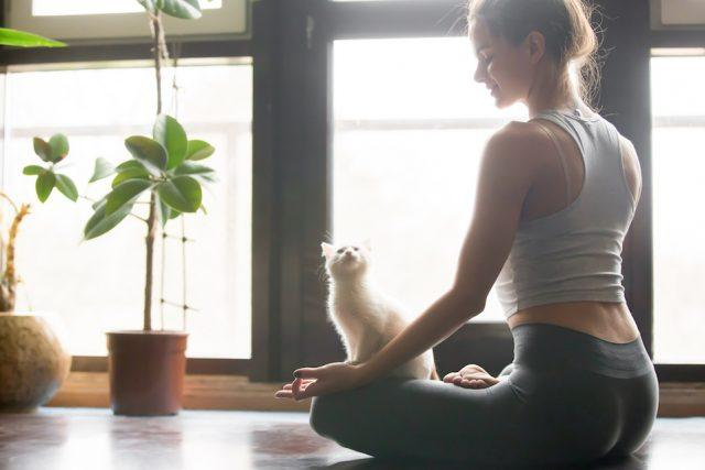 woman practicing yoga with cat