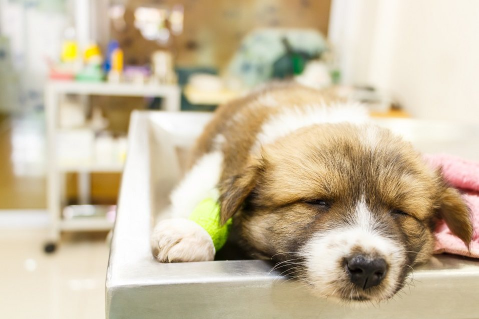 pet stores that sell puppies things pet stores don t want you to know 1800