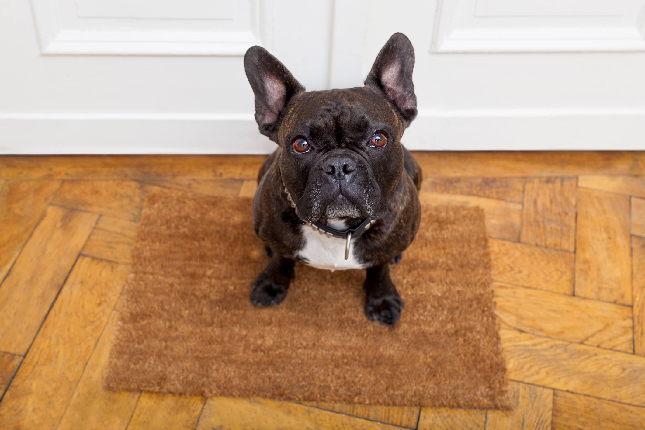 dog sitting at door