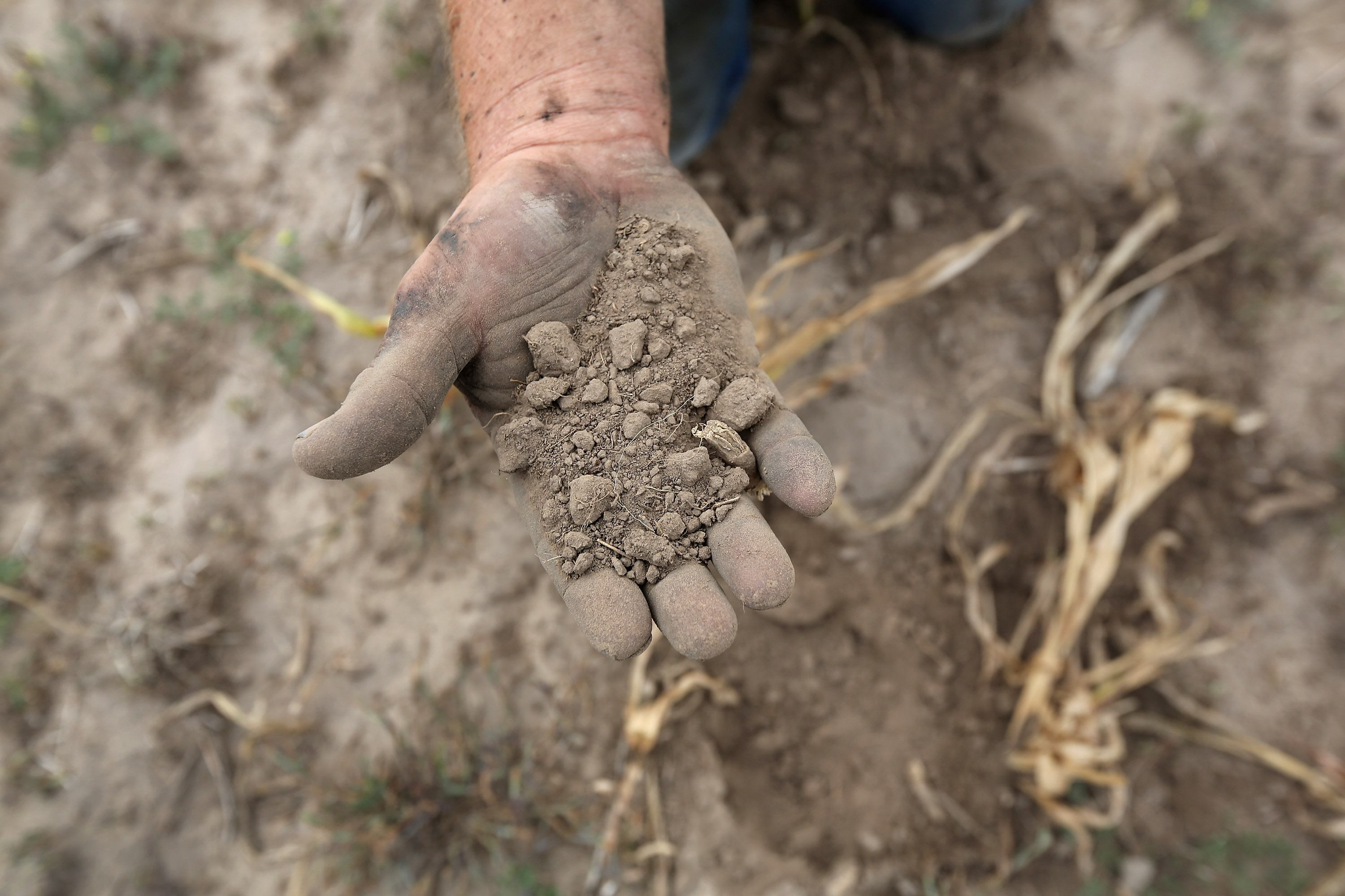 A Kansas farmer sifts through arid topsoil under a ruined crop on the family farm