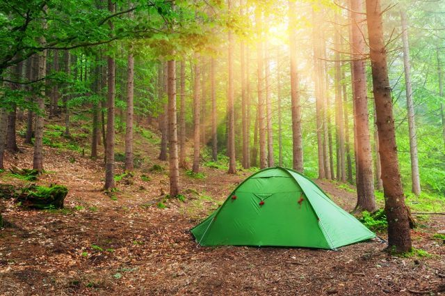 green tent outside in the woods