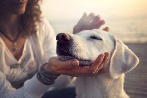 Proven Ways Pets Improve Your Life, According to Science