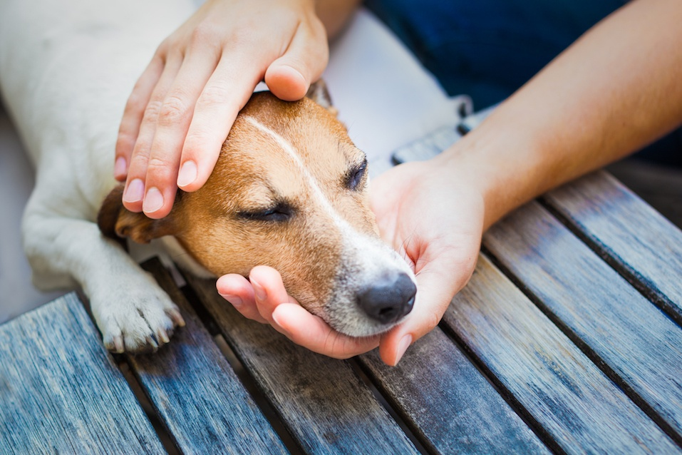 owner petting his dog, while he is sleeping or resting with closed eyes