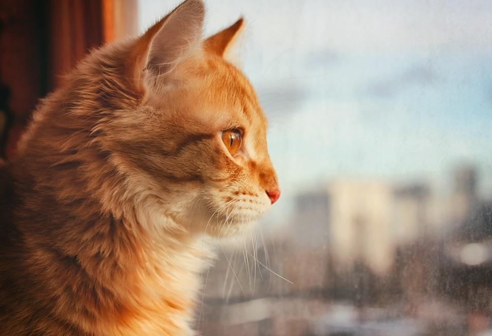 red pet cat sitting on the windowsill