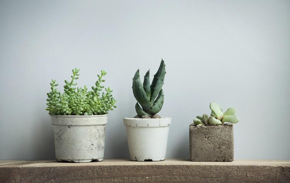 tiny succulents in concrete pots