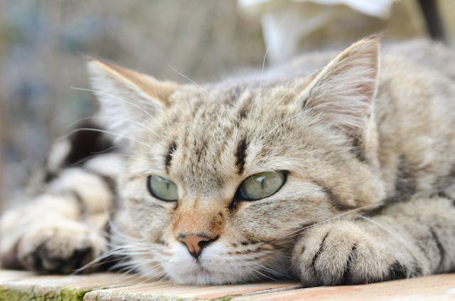 Study cats smarter than dogs