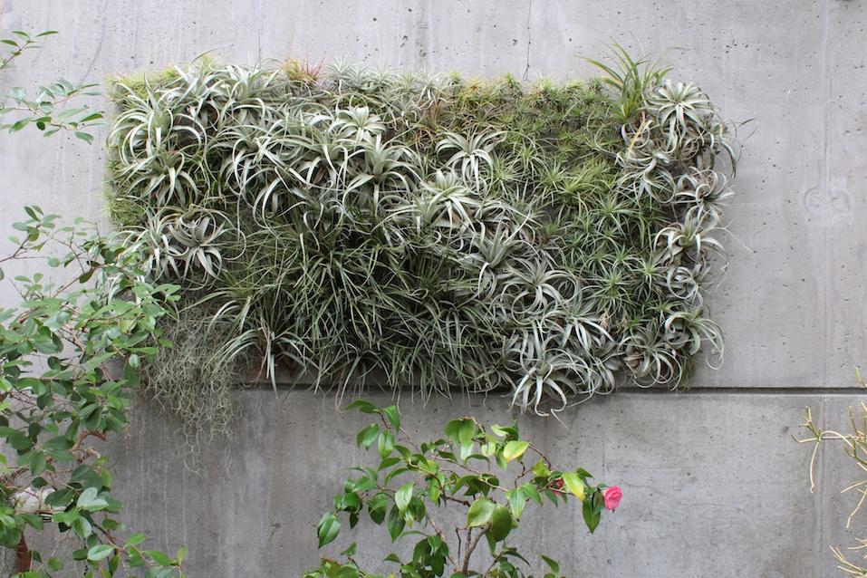 Air plants living wall sculpture