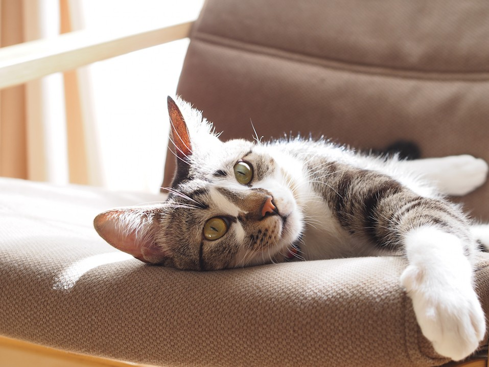 Cat relaxing on a chair