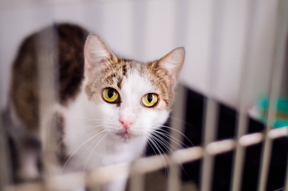 A frightened kitten with green eyes staring out from a cage.