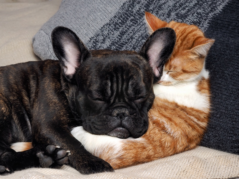 Cute cat and dog sleeping together