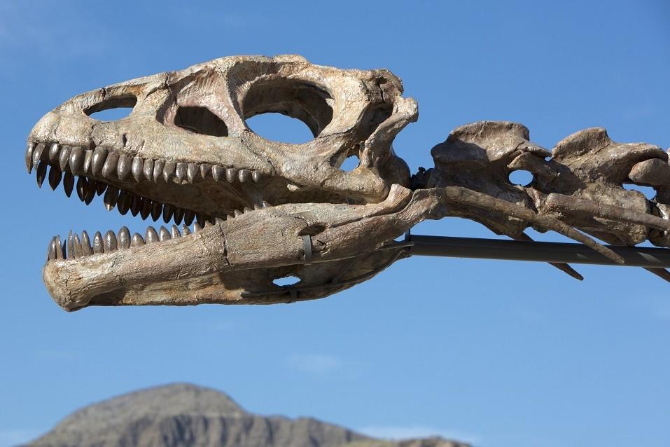 Dinosaur's head skull