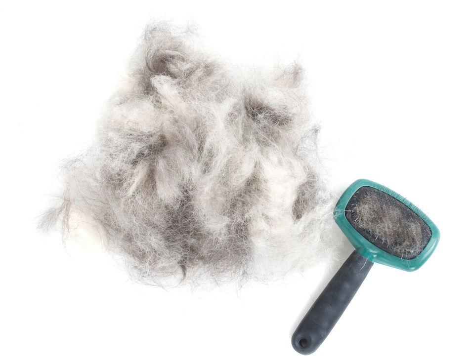 Dog Grooming Brush and Hair