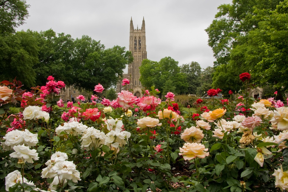Duke Chapel in Durham, North Carolina with the rose garden in the foreground