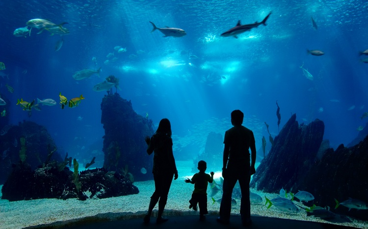 Family watching an underwater tank with corals and fish