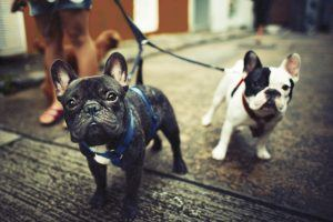 From Dog Walking to Housesitting: 15 Easy Ways to Make Extra Money for Retirement