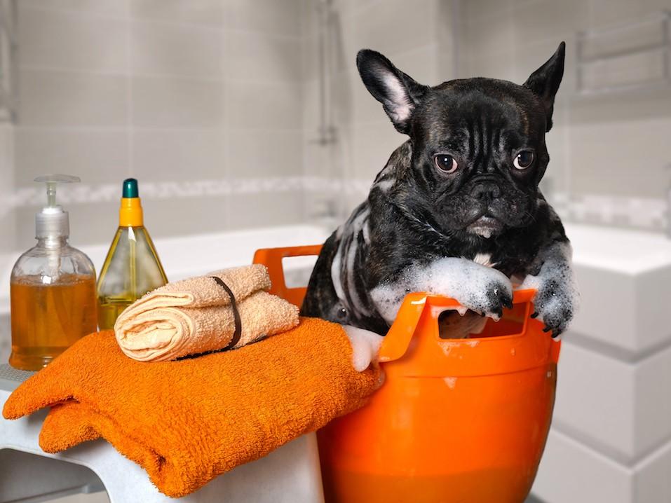 Funny dog wash in a basin,