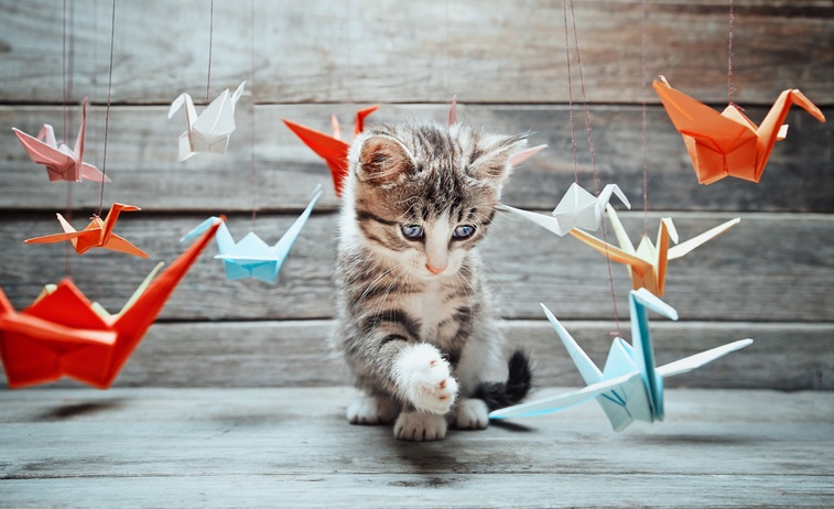 kitten is playing with colorful paper cranes