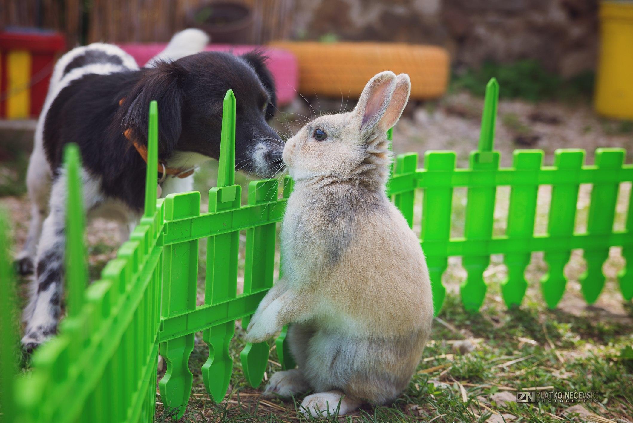Dog meets a rabbit