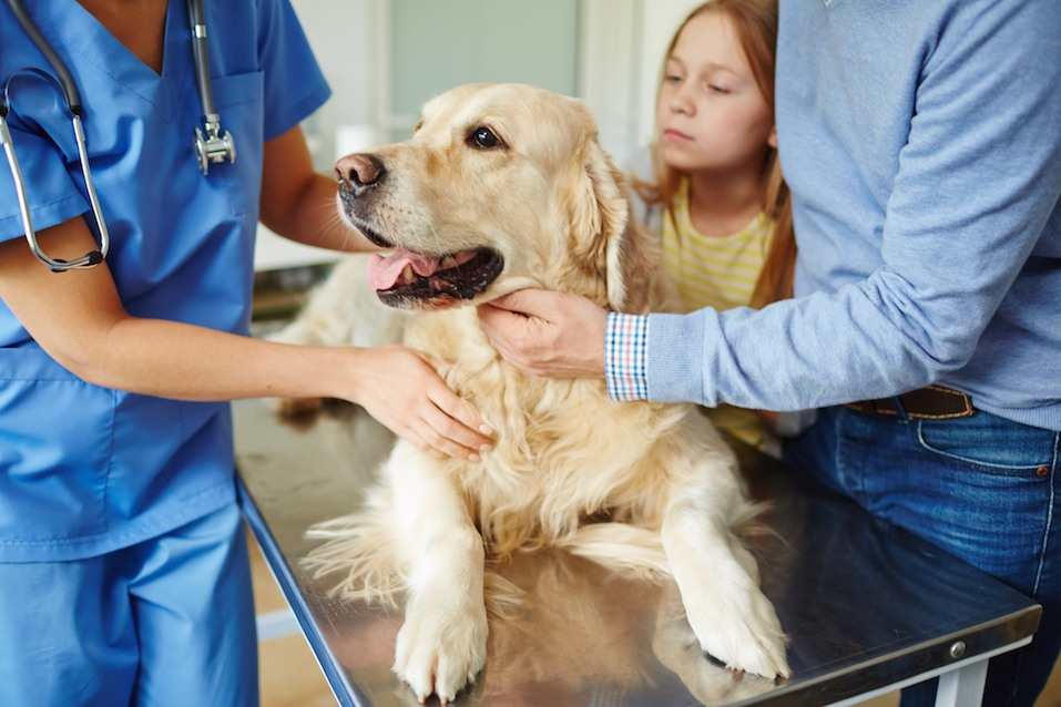 Owners bringing their pet to veterinarian