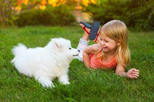 Here's What You Need to Know to Successfully Train a New Puppy