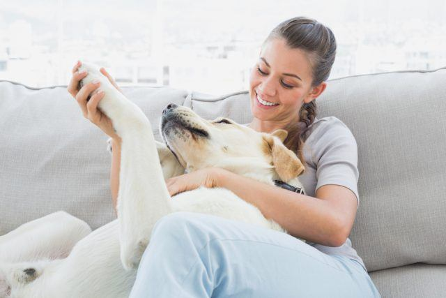 woman petting her yellow labrador on the couch