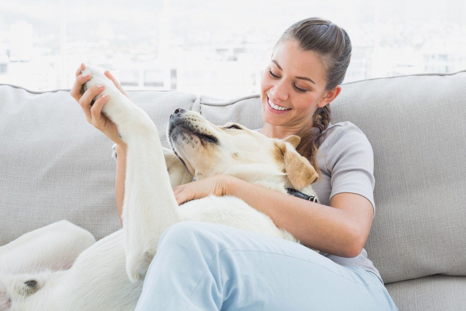 how to get rid of dog hair on couch