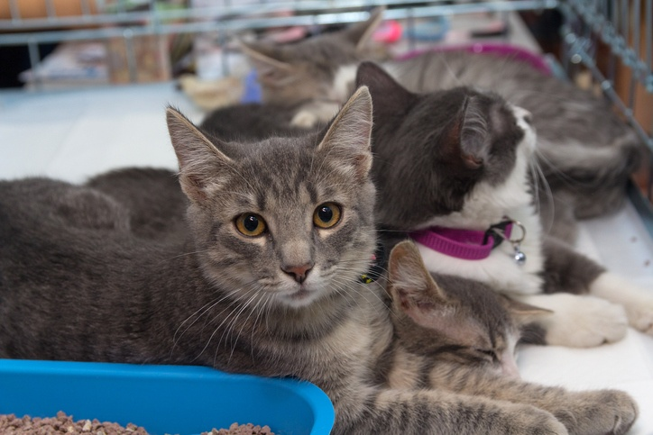 Homeless kittens in a cage at the shelter