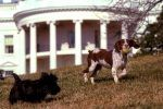 The Best Reasons Donald Trump Should Have a Dog at the White House