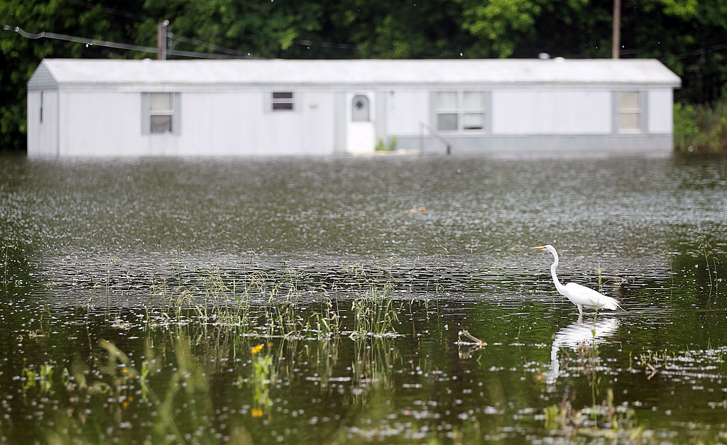 A crane searches for food in the Mississippi River floodwaters