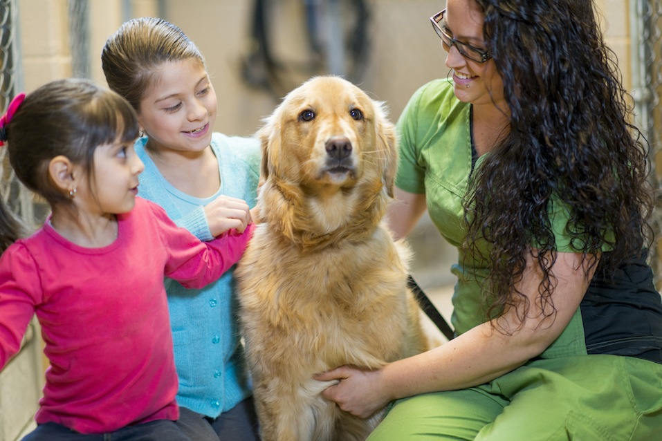 Kids picking a dog to adopt from the animal shelter.