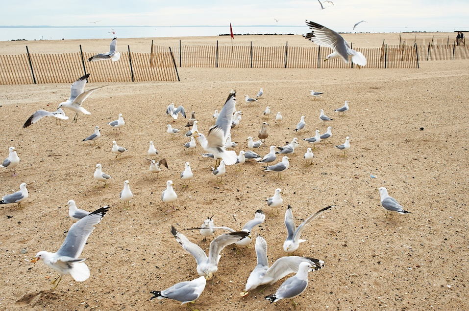 Seagulls at Brighton Beach