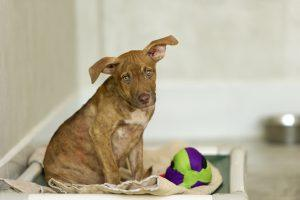 15 Things Shelter Dogs and Cats Wish You Knew