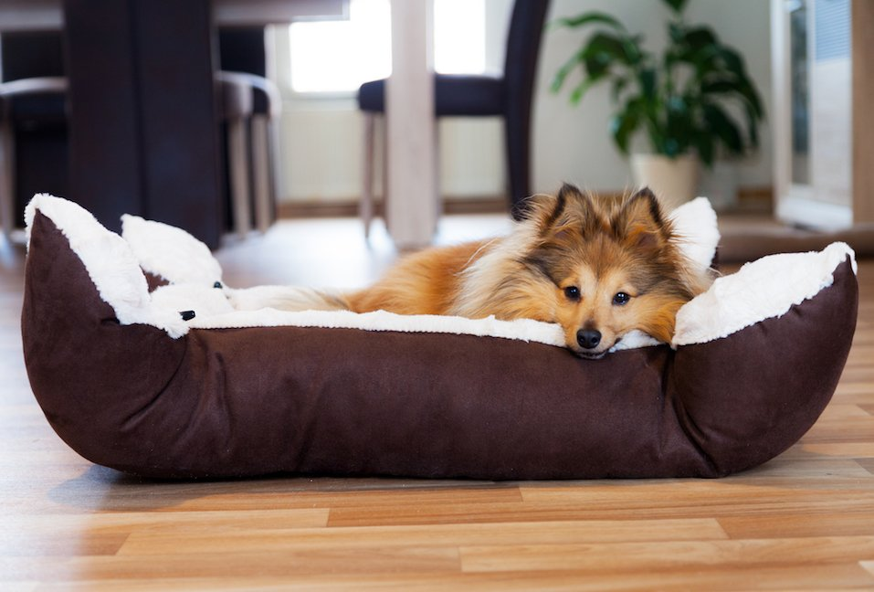 Dog lying in his pet bed