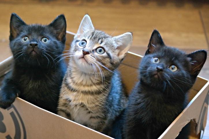 Three Kittens in a Cardboard Box
