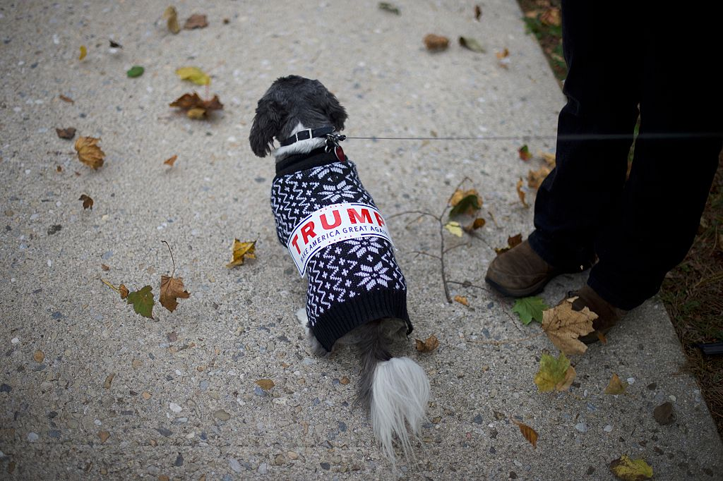 A dog is dressed in a sweater and campaign bumper sticker.