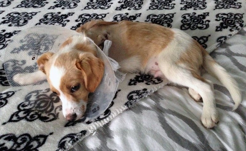 puppy wearing cone