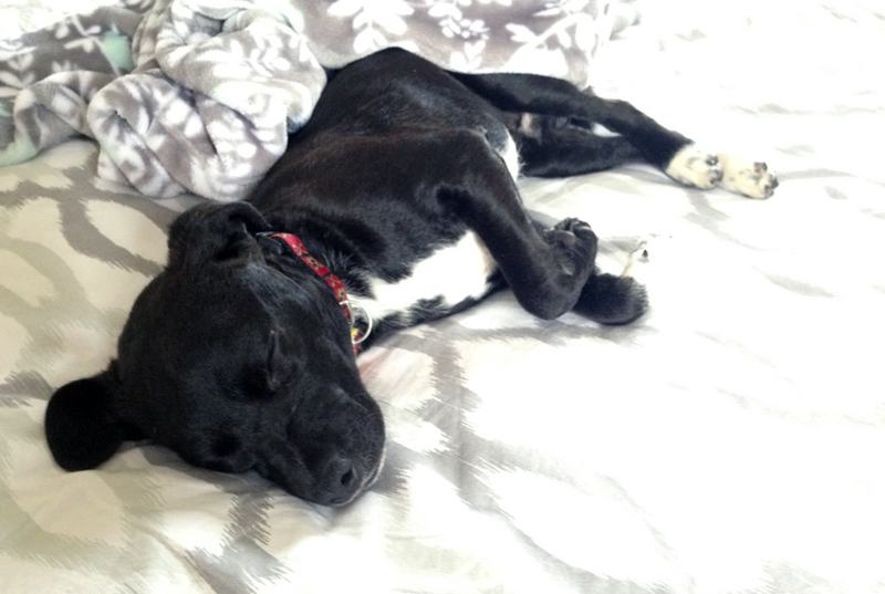puppy sleeping on bed
