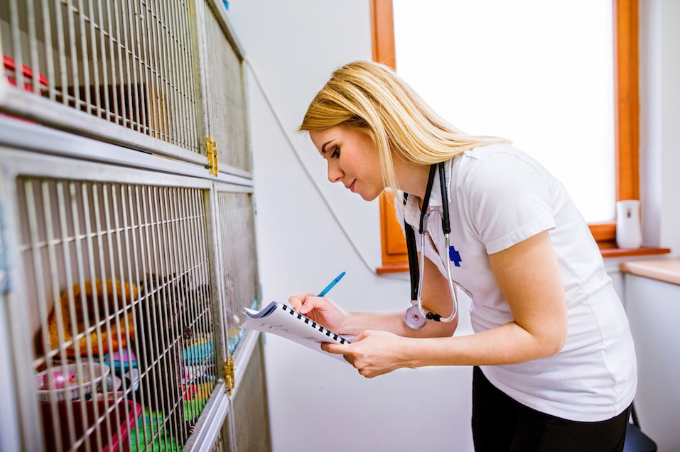 Veterinarian writing into a notepad about health of cats in cage