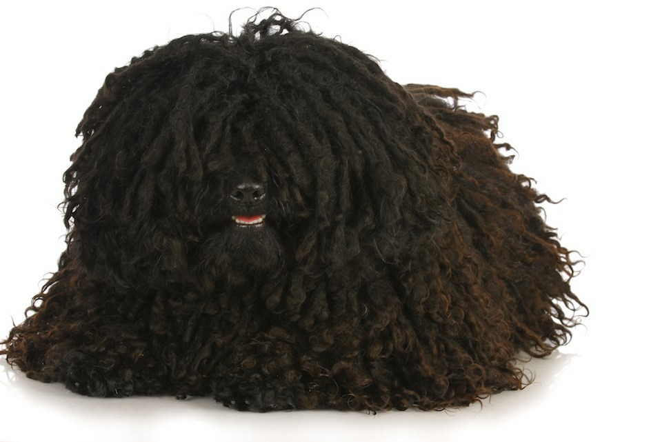 corded puli laying down