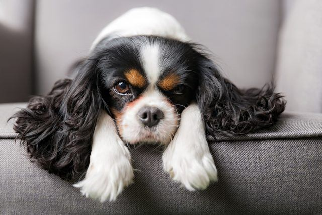 These Surprising Signs May Mean That Your Dog Isn't Feeling So Well