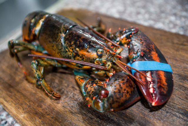 A raw lobster on a wooden table.