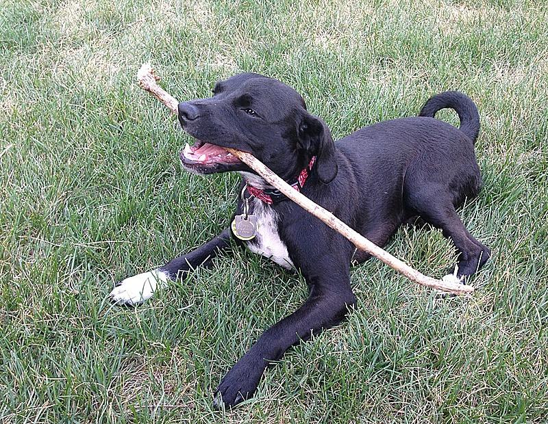 foster dog
