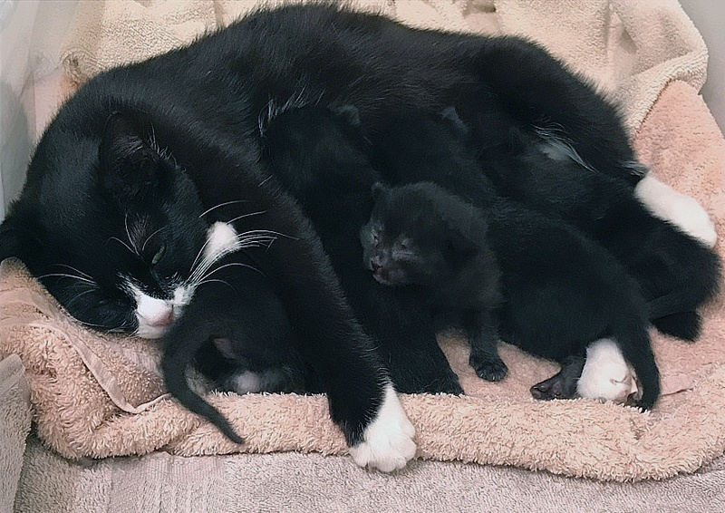 foster cat and kittens