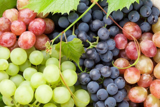 Bunch of colorful grapes with leaves.