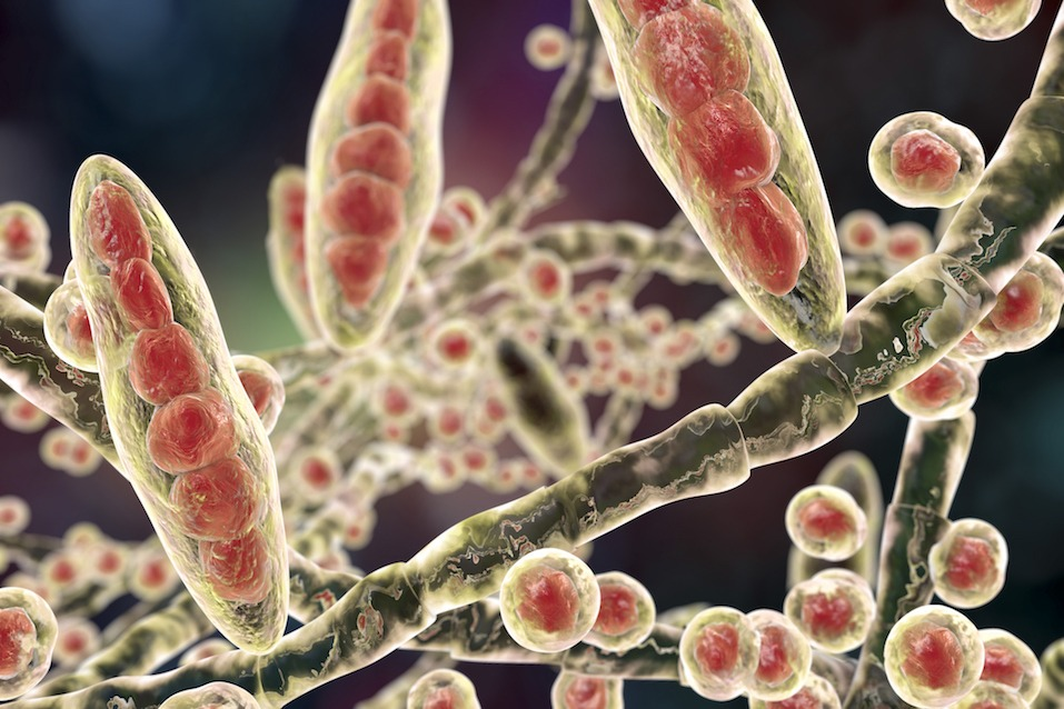 a close up image of bacteria