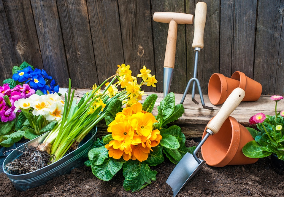 Planting flowers in pot with dirt or soil