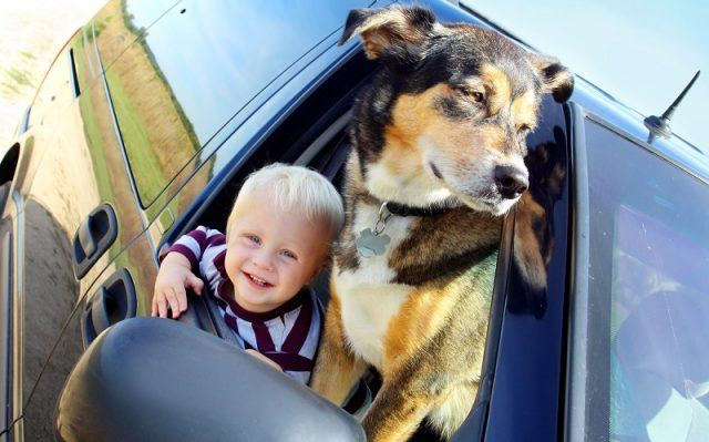 a cute, smiling baby boy and his German Shepherd dog are hanging out a minivan window on a summer day
